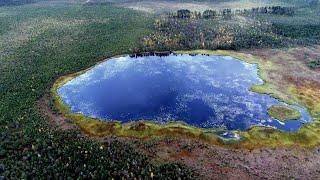 Экосистема болот