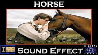 Horse Sound Effect | Horse Whinny , Walking , Snort | Hi - Res Audio