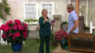 Cottage Farms 3-Pc Tropical Paradise Hardy Hibiscus Collection on QVC