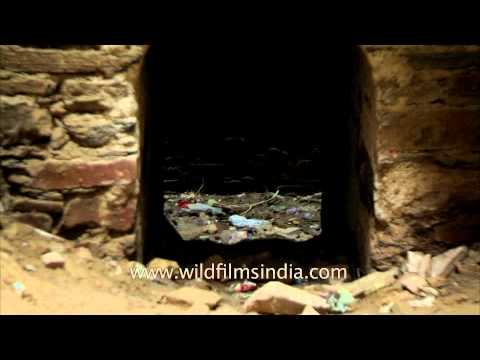 Rani ki Baoli - One of the ill maintained heritage monuments of India