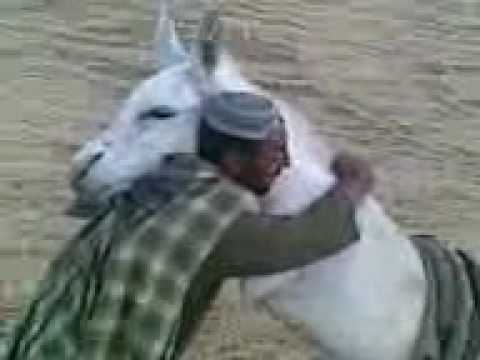 Funny Pashto Video