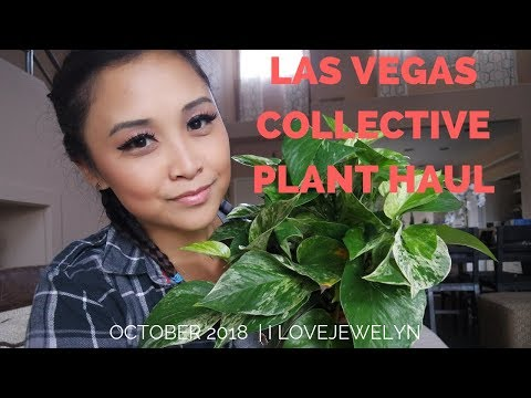 Las Vegas Plant haul | October 2018 | ILOVEJEWELYN