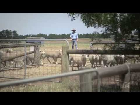 My Farm300 journey: Victorian mixed farming producer and feedlot operator Simon Ross (part 2 of 2)