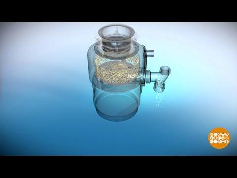Сельдерей - Полезные и опасные свойства сельдерея