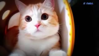 Tak tun tuang - Upiak isil siap mandi ( parodi kucing lucu)2018