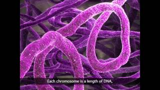 Zoom in on your genome - female