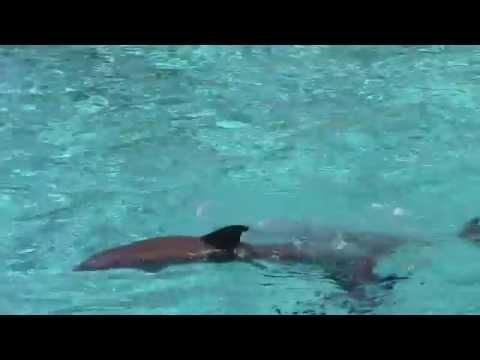 planete sauvage spectacle de dauphins