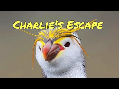 How Charlie Escapes The Zoo - Children's Bedtime Story/Meditation