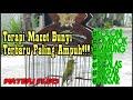 Terapi Pleci Bukpar Dan Macet Bunyi Terbaru 100 Nyauttt Ngriwik(.mp3 .mp4) Mp3 - Mp4 Download