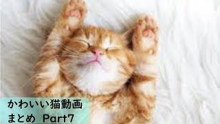 【かわいい】おもしろ猫動画まとめ Part7【おもしろ】