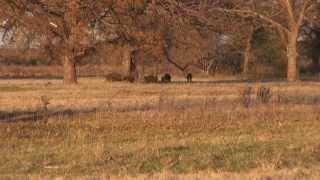 Video Hog Hunting Oklahoma download MP3, 3GP, MP4, WEBM, AVI, FLV Desember 2017