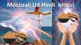 Möcüzəvi UD HİNDİ bitkisi