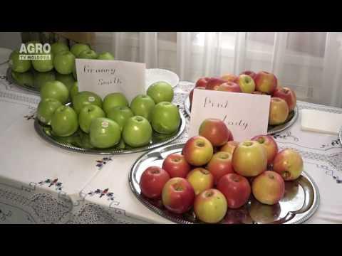 Businessul fructelor în Republica Moldova