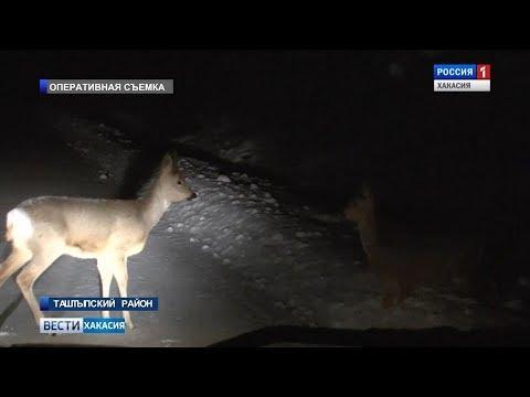 Варварская охота под покровом ночи. 04.12.2017