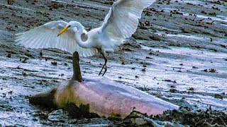 Dolphins and Birds Collaborate to Hunt Fish | BBC Earth