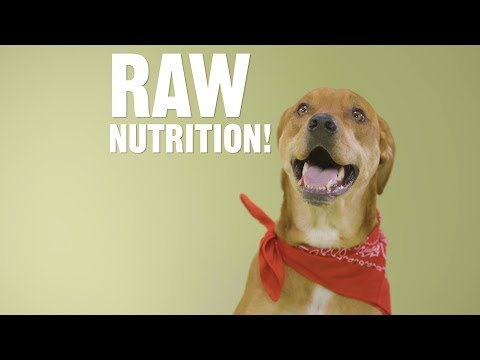 is-there-an-easy-way-to-feed-my-dog-a-raw-diet?-|-chewy