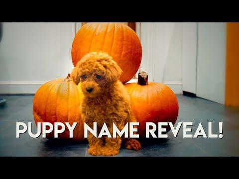 Puppy's First Day out - We Went Pumpkin Picking 🎃