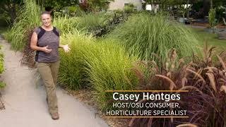 "Ornamental Grass Series: Not True ""Grasses"""
