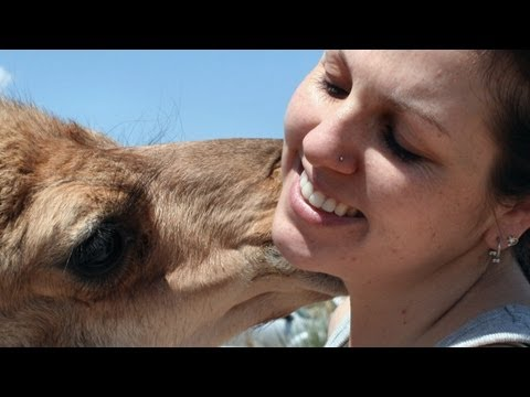 Growing Up: The Story of Baby the Dromedary Camel