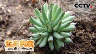 《远方的家》 20190821 黑龙江小北湖国家级自然保护区——野性重生的地方| CCTV中文国际