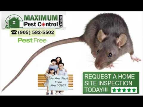 Pest Control Service, Rodent Pest Control Service, Bedbugs