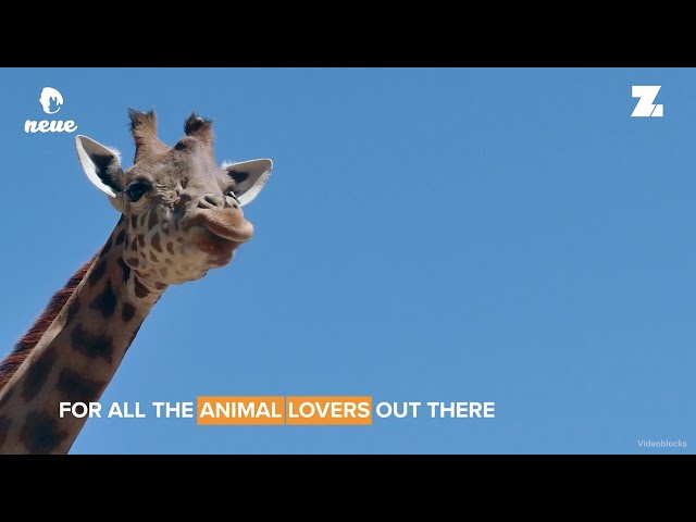 Airbnb's New Animal Experience