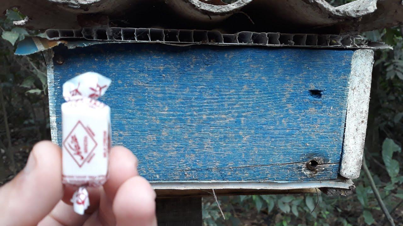 Coloque 1 BALA Na Sua Caixa De Abelha E Veja O INCRÍVEL