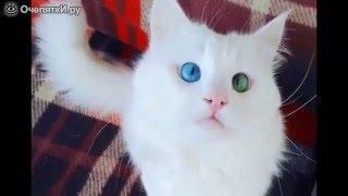Один глаз голубой, другой  зелёный бывает же такое )