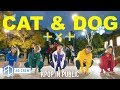 KPOP IN PUBLIC TXT 'CAT & DOG' Dance Cover [AO Crew - Australia] ONE SHOT vers.
