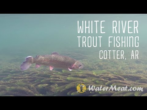 White River Trout Fishing | Cotter, AR