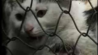 China Dog And Cat Fur Farm Investigation