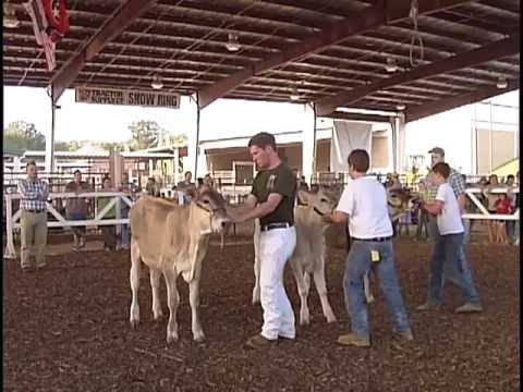 Central Region 4H Dairy Show / Junior Dairy Show - 2012 Williamson County Fair