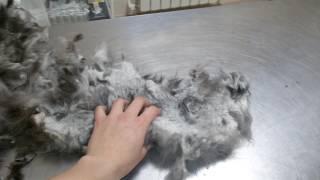 Состриженная шерсть! Кот в запущенном состоянии....