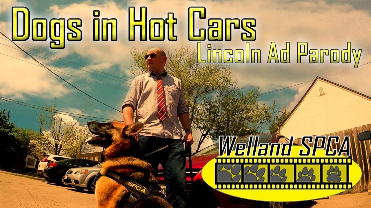 Dogs In Hot Cars Lincoln Car Commercial Parody Youtube