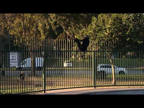 front flip to fence (nathan angle) - 980054-2