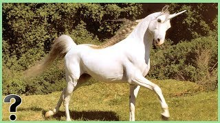 What If Unicorns Were Real?