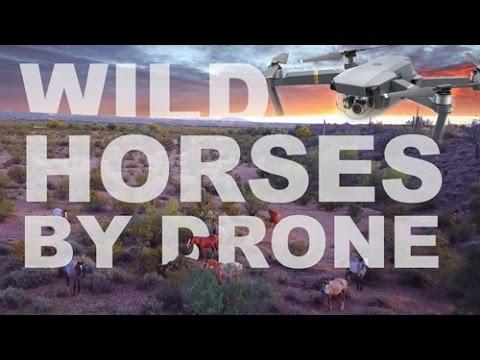 4K - Are Those Wild Horses? DJI Mavic Pro Drone Footage - Phoenix AZ