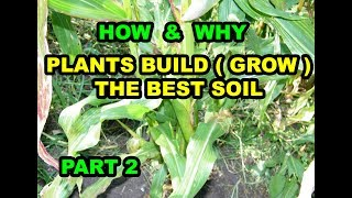 HOW & WHY Plants Build ( Grow ) the BEST SOIL in Vegetable Gardens for beginners Series 101. Part 2