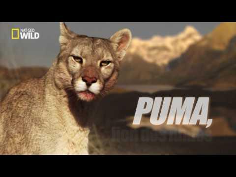 Puma - Survivre est un défi