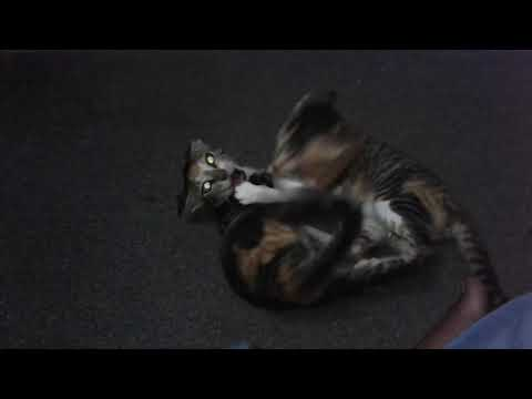 Cats Fighting Video 2018-There's Nothing More Funny on Youtube-Untimate Funny Cats