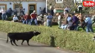 Funny videos People Fails, Bull Fighting, Try not to laugh or grin