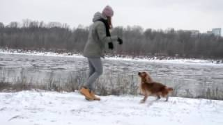 Amazing cocker spaniel Scooby  dog tricks / sztuczki
