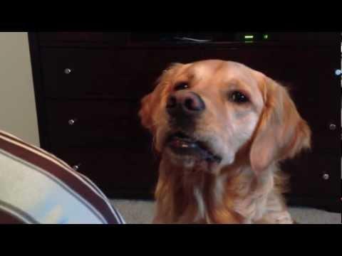 Doggie says woof woof!!