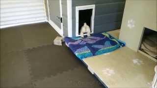 No Kidding - Maltipoo Villa - Puppies Life at 6 Wks Old!!!