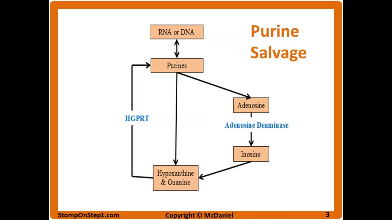 purine salvage pathway leschnyhan syndrome scid gout