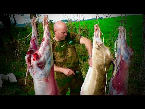 #waikarimoana Hunting Fallow Deer, 22-250 And 270 Win Rifle, For Meat In New Zealand # 162