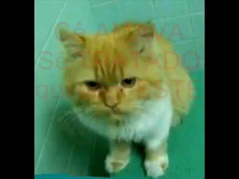 Download kikocat in is live  miauwen van de honger.