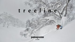 Treeline (Full Film) | The Secret Life of Trees
