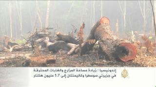 حرائق إندونيسيا تفقدها غاباتها