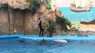 Одесский Дельфинарий(Представление в Одесском Дельфинарии. В программе номера с котиками, морским львом (кажется правильно),..., 2011-08-16T06:51:42.000Z)
